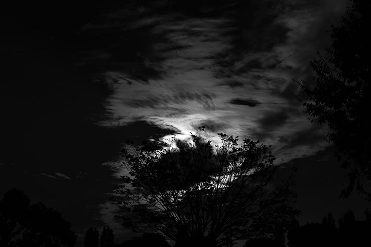 鶴見緑地公園の写真